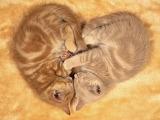 Cute-kittens-sleeping-1024x768
