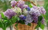 Flowers, violet, basket, lilacs