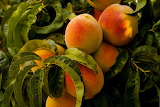 healthy food-peaches