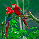 Papageiengespräch