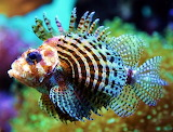 Shallow Tropical Fish