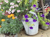 Watering can and flowers