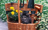 ☺ Cutest gardening equipment...