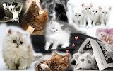 Cute-Kitten-cute-kittens-18854333-1920-1200