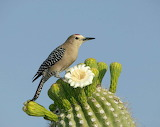 A Bird On A Cactus