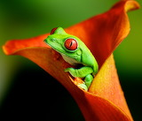 ☺ Pretty colours of nature...