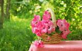 Pink flower1
