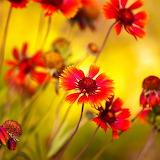 Summer Flowers...
