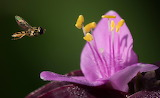 Flowers - and Bees