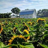 Spencer Farm in Noblesville