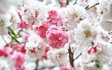 Flower garden plant (341)