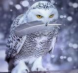 Owl - Snowy Owl?