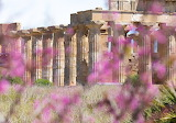 Doric Temple at Selinunte - Italy