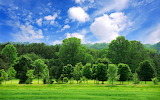 11-nature-photography-green