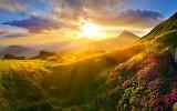Kwitnące różaneczniki w górach