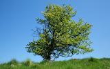 Lone_Tree_by_Sloma