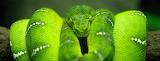 Hisst Green