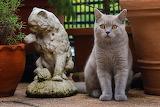 Cats Sculptures British Shorthair Glance 570069 1280x853