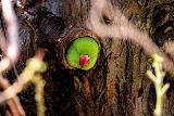 Parrot nest