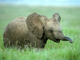 Baby elephant...