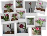 Tulip-Collage
