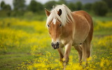 Gorgeous-horse