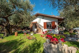 Cottage, garden, flowers, olive trees, Viterbo, Italy