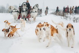 Traditional Russian Hunt with Borzoi