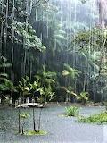 Jungle Downpour