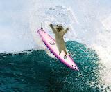 Allie surfing