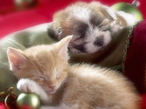 Cute-puppies-and-kittens-sleeping-together-i2