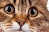 ^ Beautiful cat