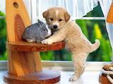 Щенок и кролик