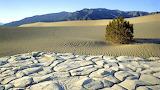 Hearty Survivor In Death Valley California USA