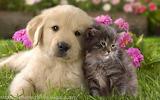 Pup & kitty