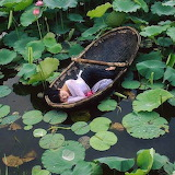 Sleeping With The Lilypads