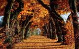 Tree Tunnel of Autumn Beauty USA