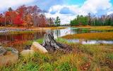 Marsh lake in autumn