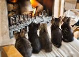 Kitten relaxation