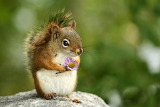 écureuil et sa fleur