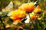 Flowers butterflie