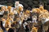 Forty, or so , cats