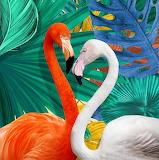 Flamingo-546