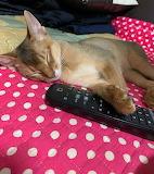 Turned Off. Need Nap.