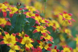 Flower-nature-yellow-red