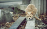 Cat-outdoor-animal