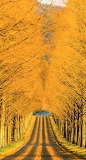 #Fall Foliage ~ Blue Ridge Parkway
