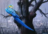Macaw in Burned Forest