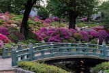 Trees, flowers, bridge, park, garden, Japan, Kyoto