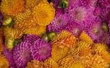 flowers#00213